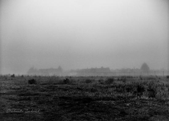 Entre la niebla. Roberto Cabral