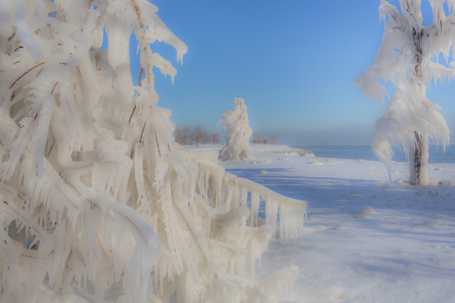 Ice Trees. John.