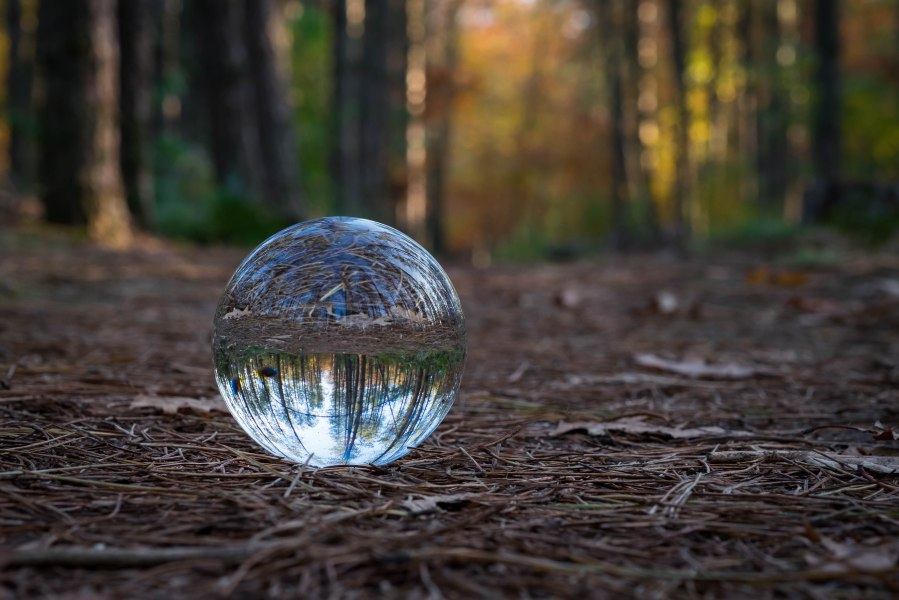 Small forest in a sphere. Karin Hardorff- Tebes