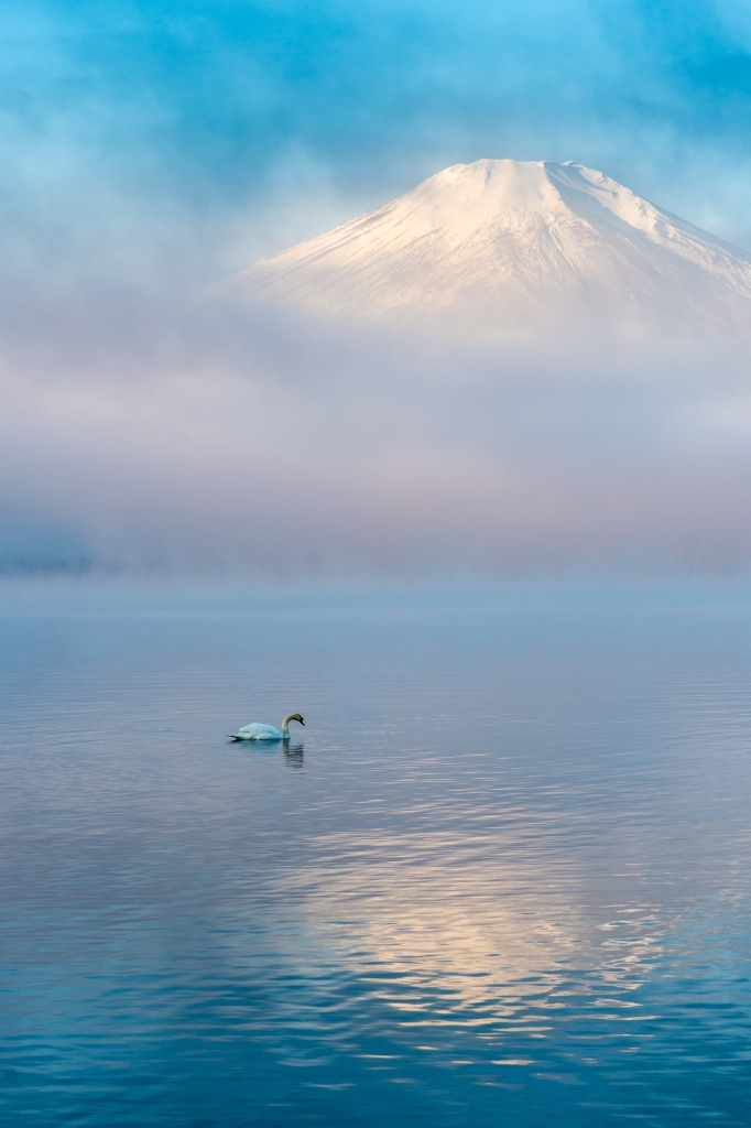 Swan lake. Foto: Shinichiro Saka. Todos los derechos reservados.
