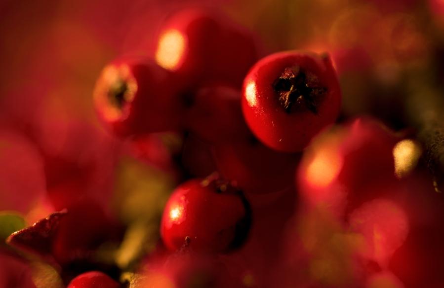 Red. Foto: Trev.Todos los derechos reservados