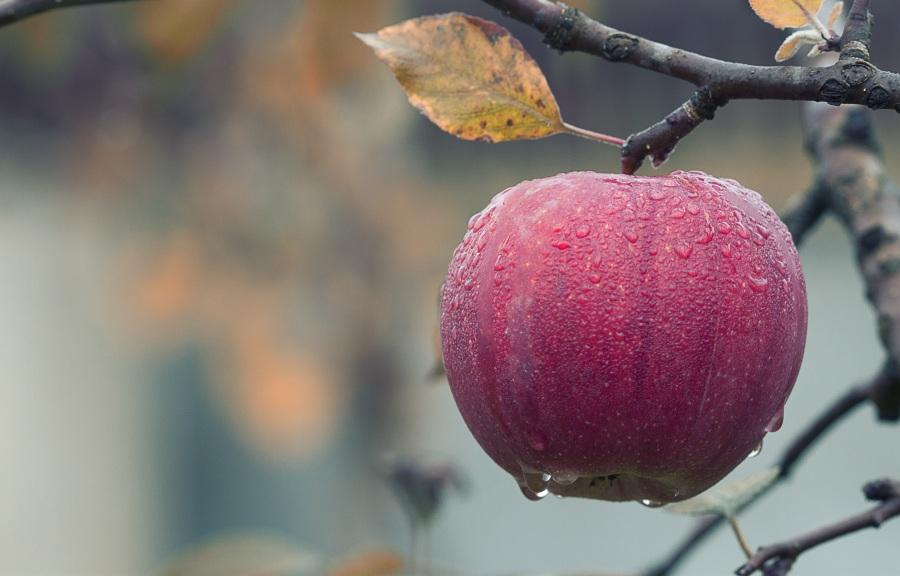apple-1122537