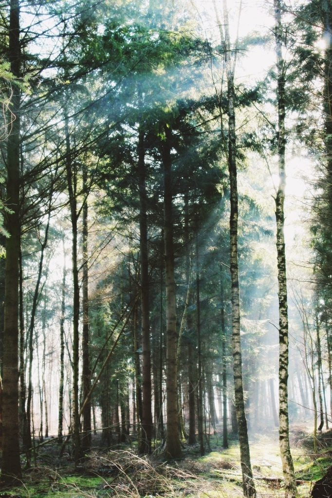 Forest. Foto: Katrin Baustmann. CC0 Public Domain.