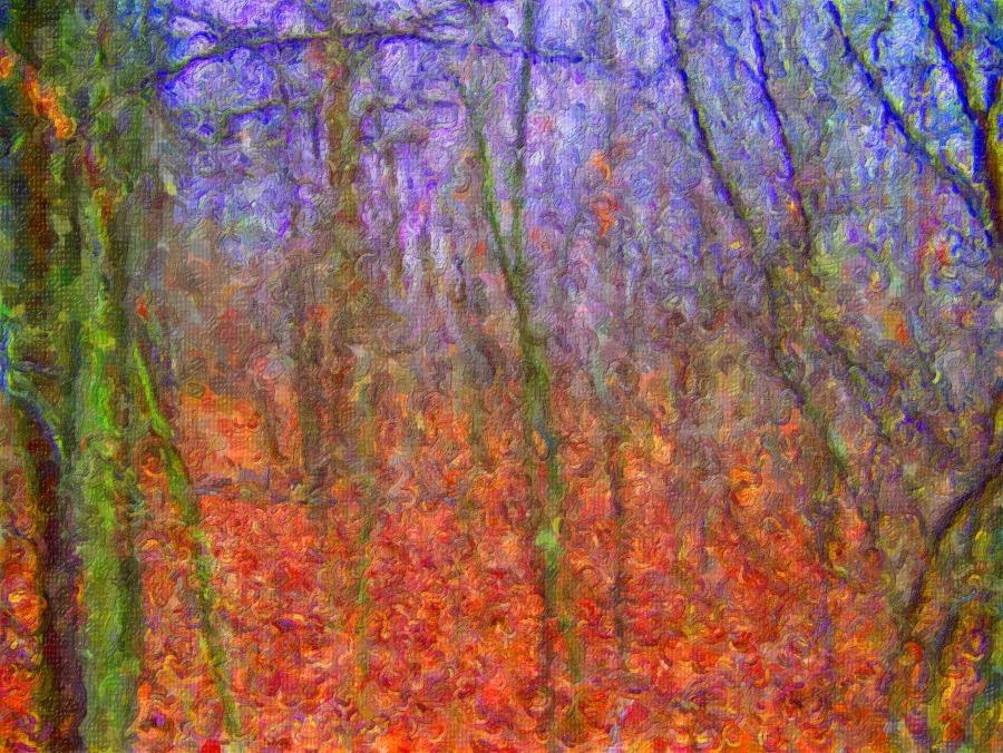 Woods. Foto: PublicDomainPictures. CC0 Public Domain.