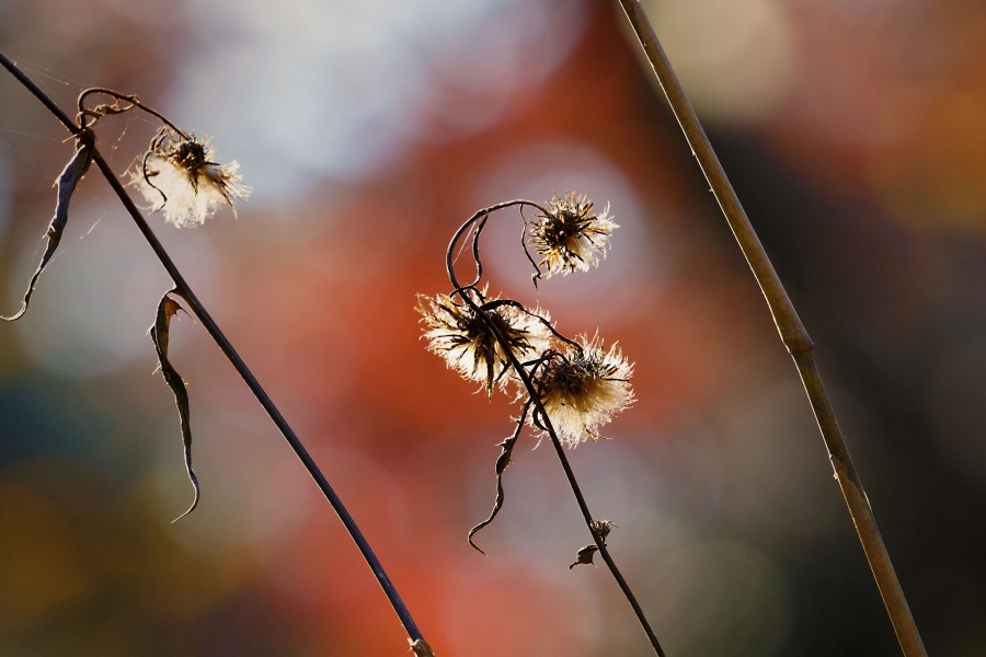 Autumn. Foto: Hideki Sato. CC0 Public Domain.