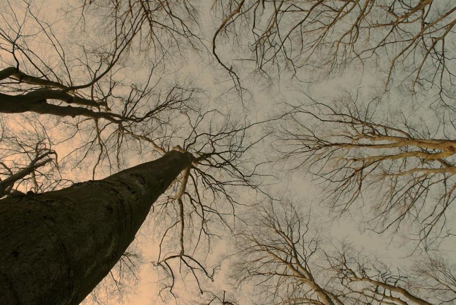 Forest. Foto: Michael Ernst. CC0 Public Domain.