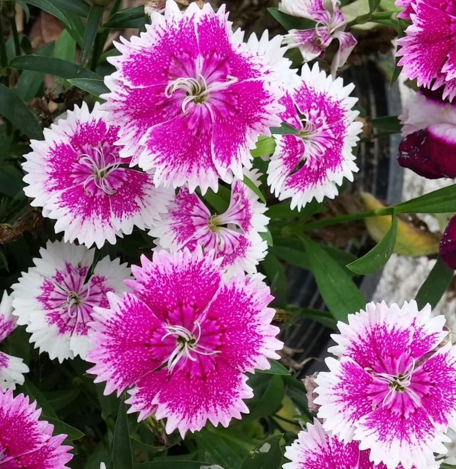 Flores. Foto: Antinomia.