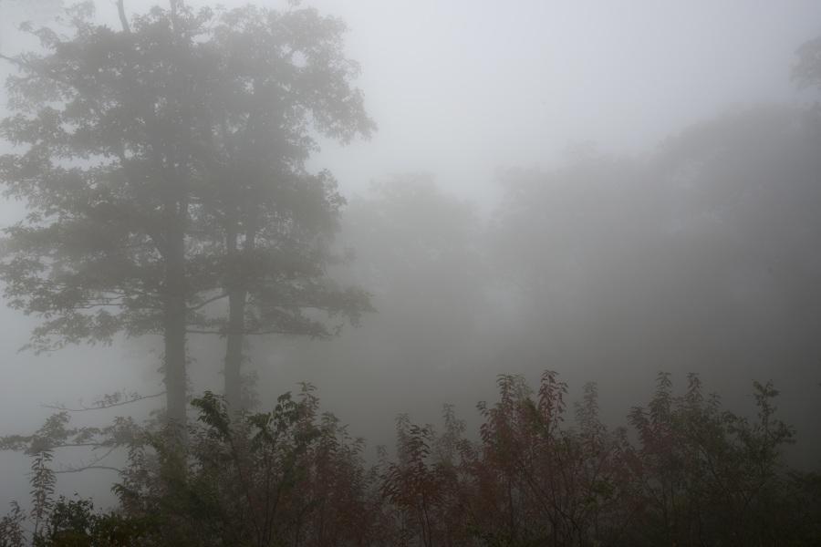 Foggy. Foto: Chanh Nguyen. CC0 Public Domain.