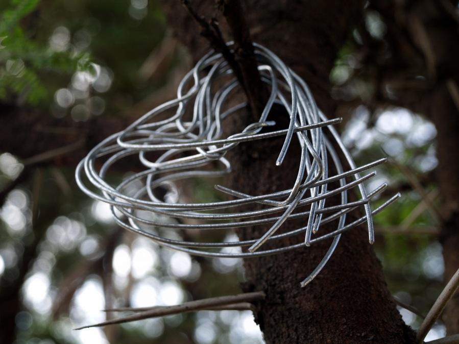 Thorn tree. Foto: Juanita Mulder. CC0 Public Domain.