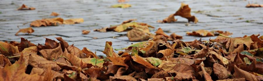 Autumn. Foto:Silvia & Frank. CC0 Public Domain