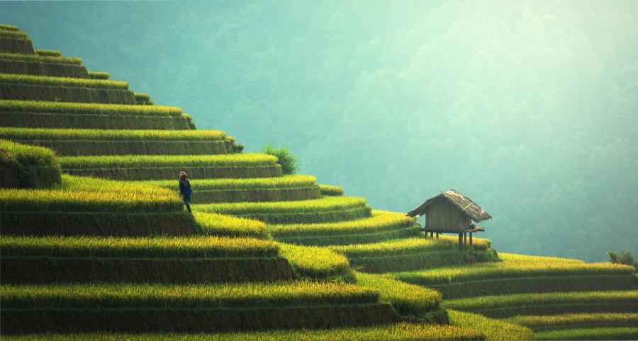Agriculture. Foto: Sasin Tipchai. CC0 Public Domain.